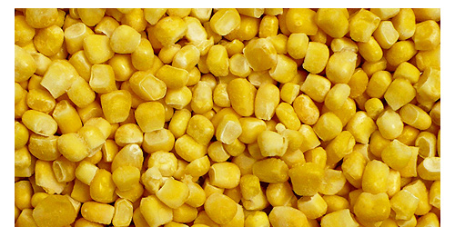 SWEET CORN - grain